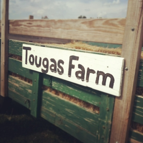 tougas farm massachusetts