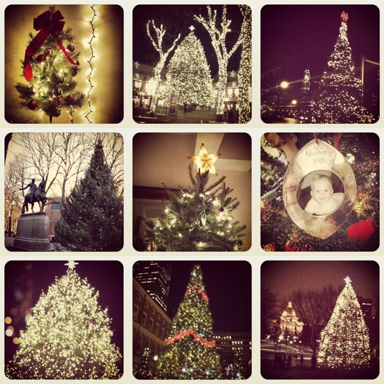 boston christmas trees