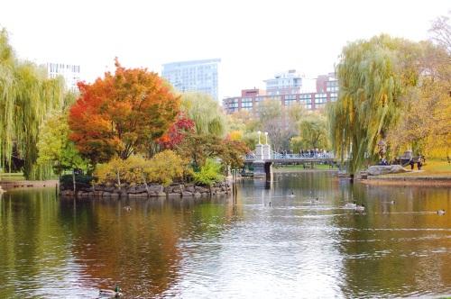 Boston Fall Foliage