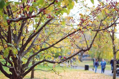 Boston Cranberries